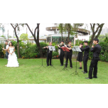 Live Music - Woodwind Groups with Flute, Clarinet, Saxophone